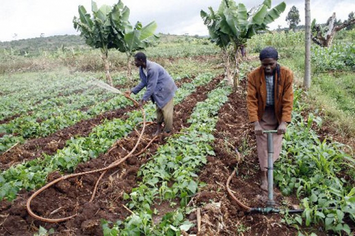 Can ICTs transform Ghana's agricultural sector?